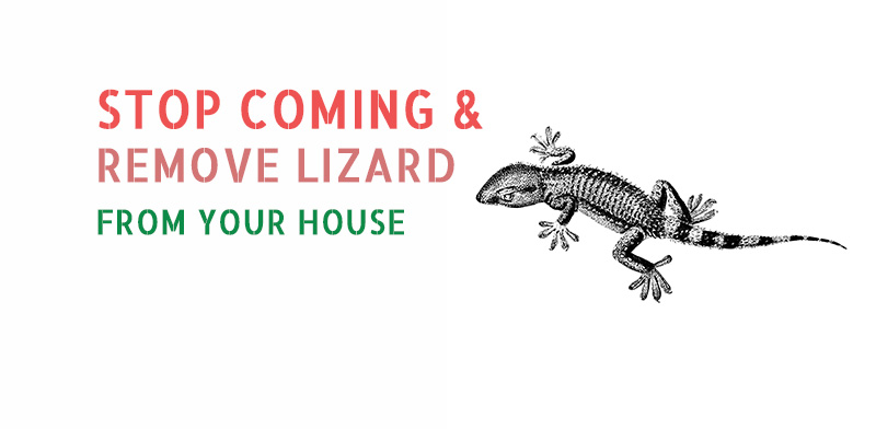 10 Home Remedies to Stop Coming & Remove Lizard from the House